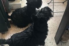 Frida e Rupert