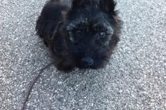 Frida la più bella cucciola